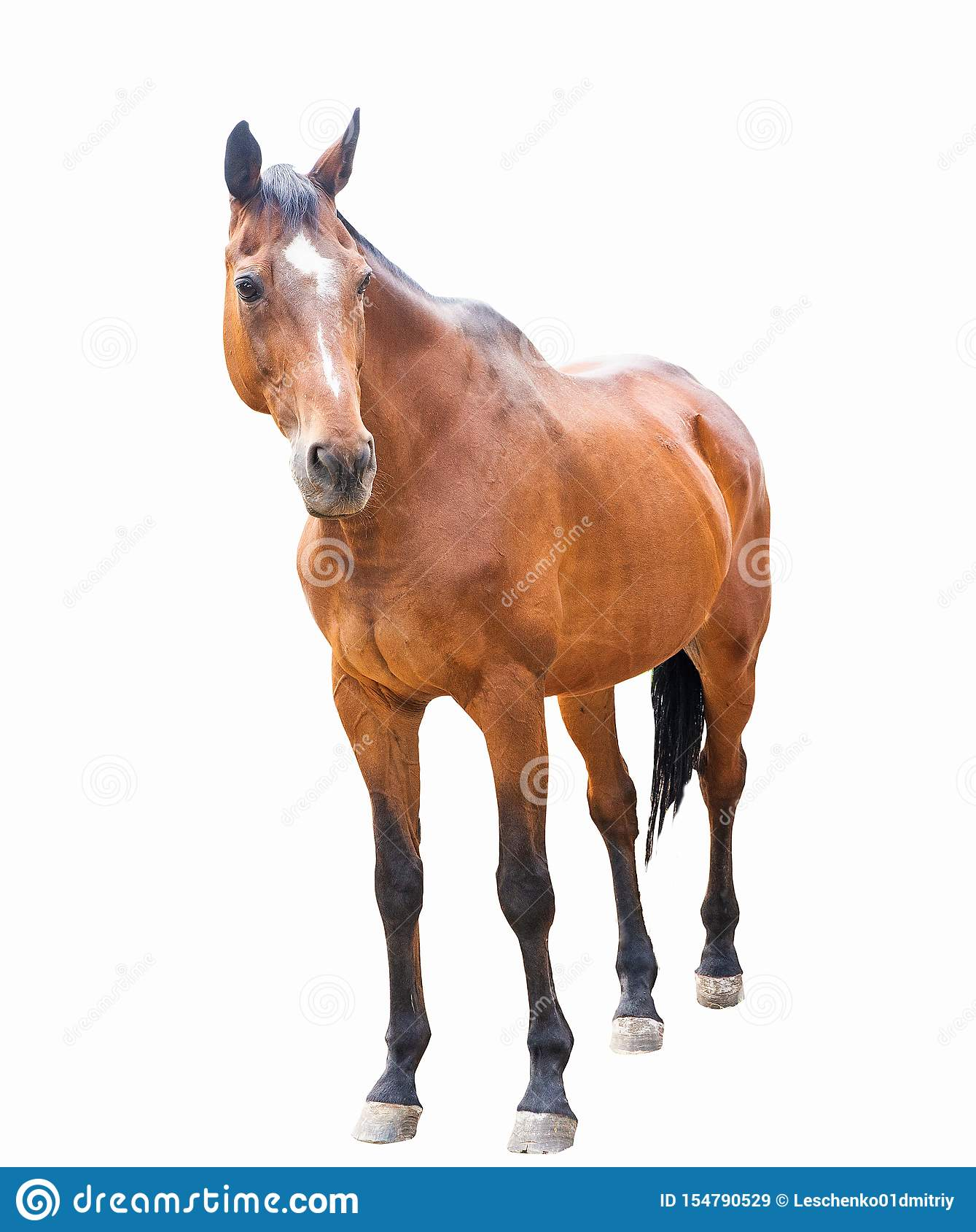 Beautiful Horse Racehorse English Racehorse Stock Image Image Of Sport Ridingn 154790529