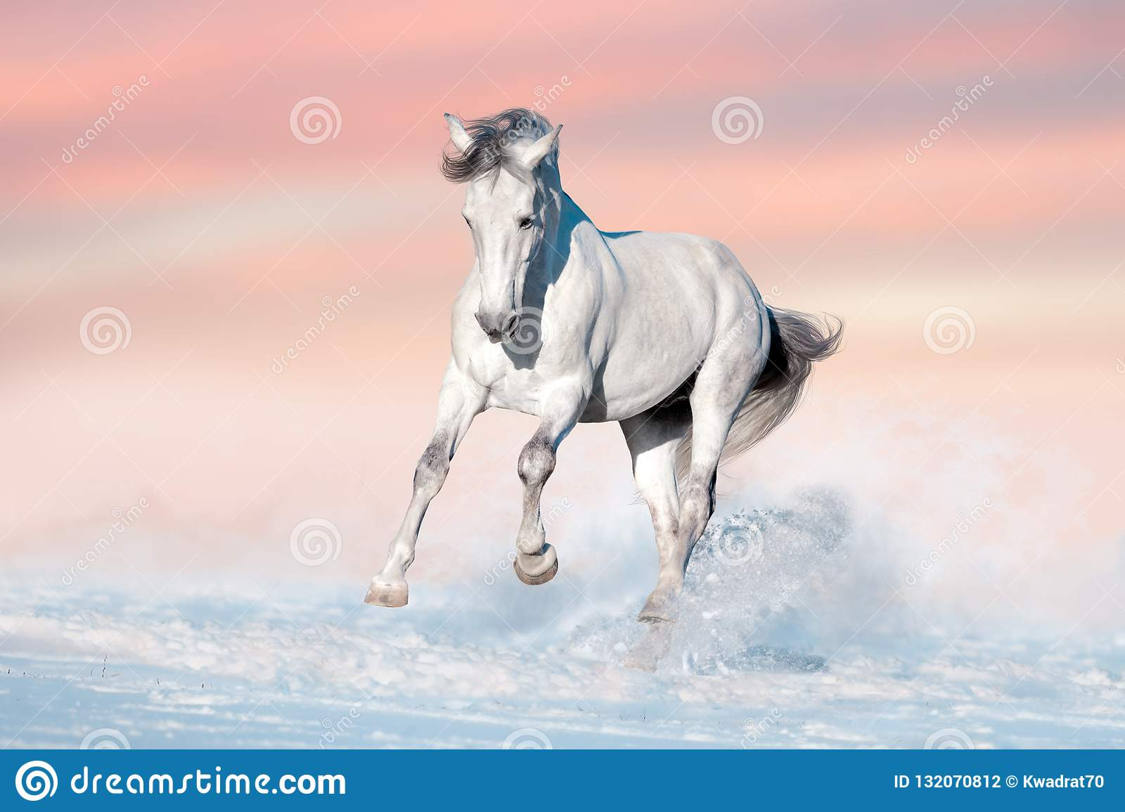 White Horse In Snow Stock Photo Image Of Horse Outdoor 132070812