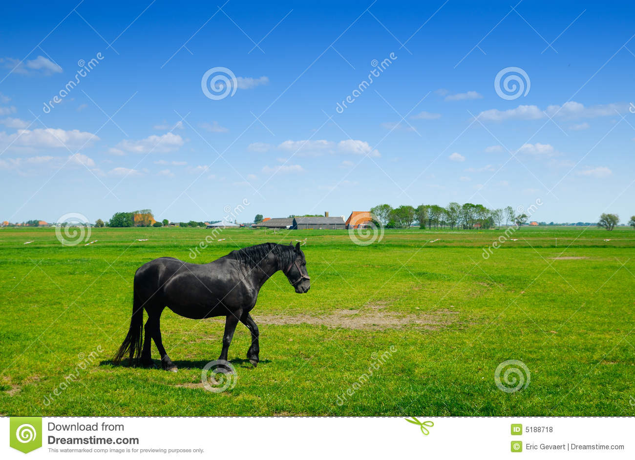 Beautiful horse in spring