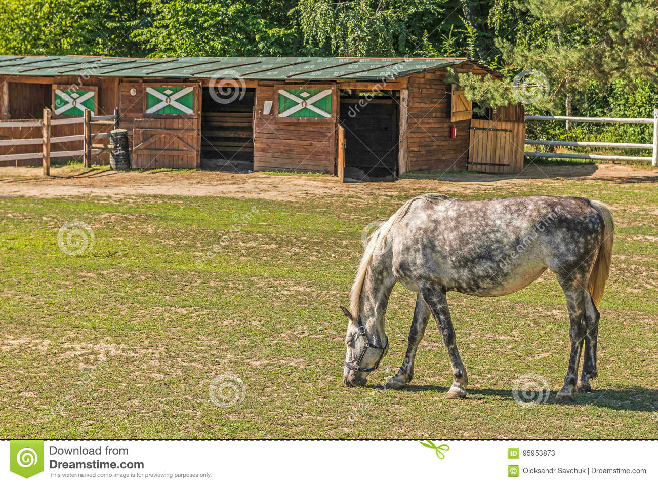 A Beautiful Horse On A Summer Playground In The Background Of A Fragment Of A Stable In Mezhyhiria Near Kiev Stock Image Image Of Outdoor Mare 95953873