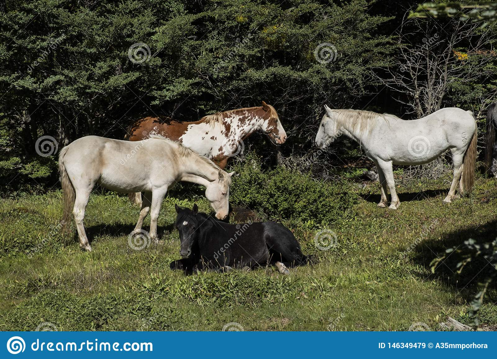 Horses on a farm in southern Patagonia. Argentina
