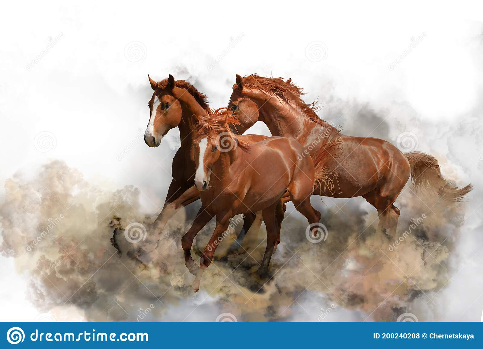 1 480 White Horses Dust Photos Free Royalty Free Stock Photos From Dreamstime