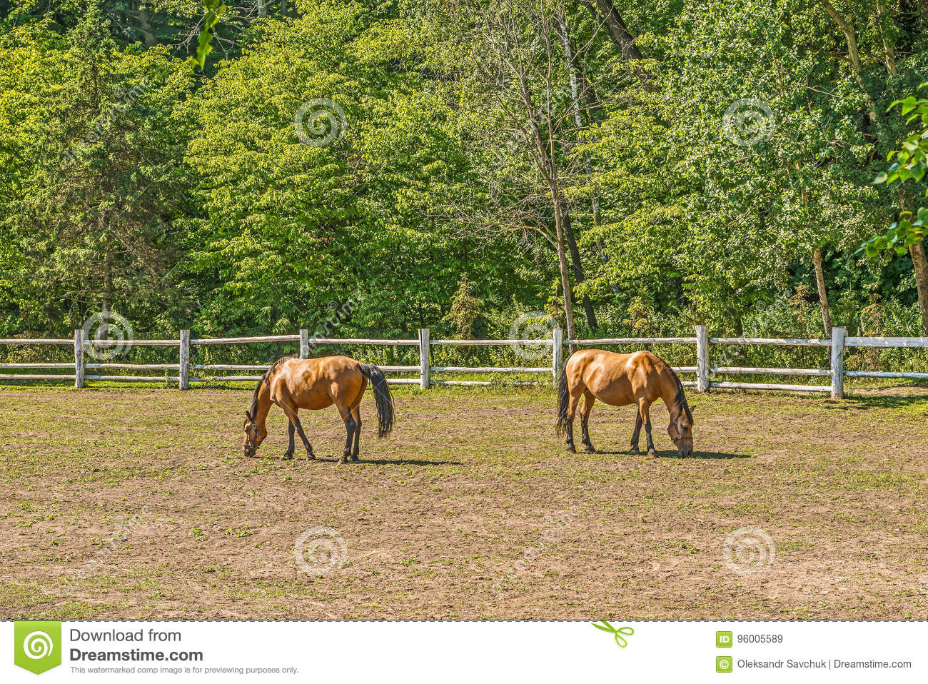 Beautiful Horses On A Summer Playground In The Background Of A Fragment Of A Stable In Mezhigiri Near Kiev Stock Image Image Of Meadow Equine 96005589