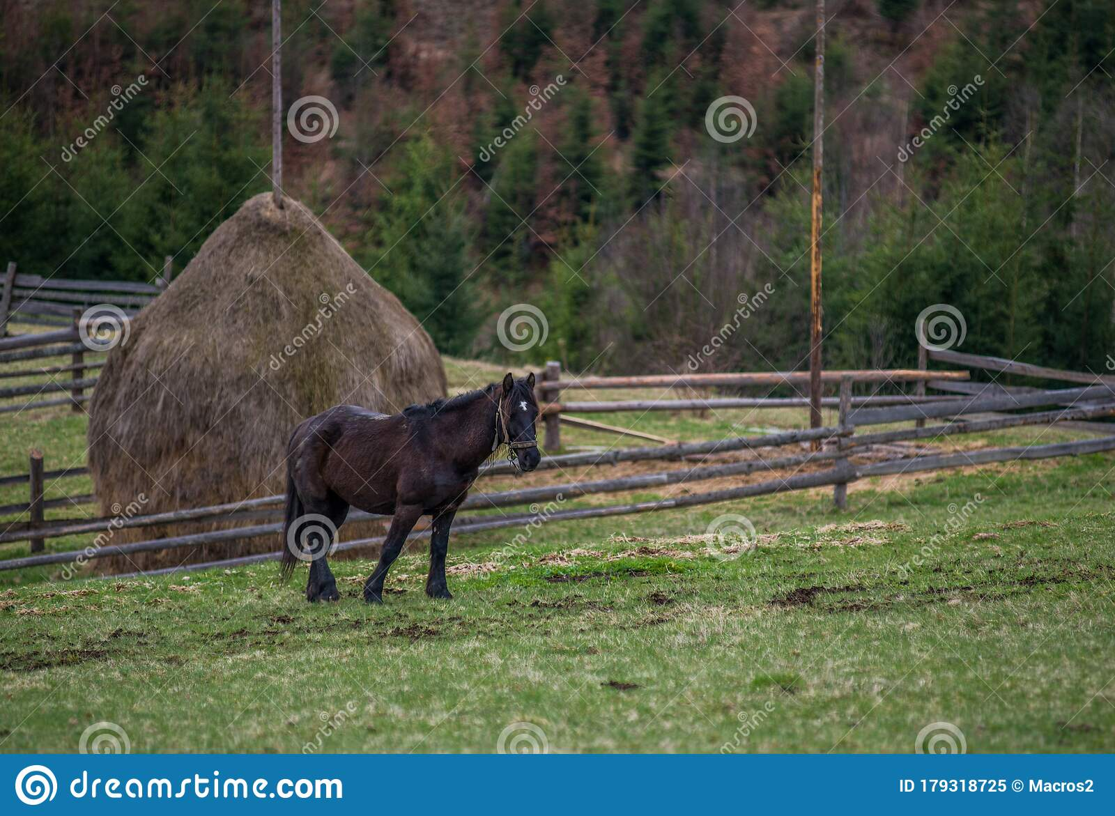 Beautiful Horses In The Wild Stock Image Image Of Horse Mammal 179318725