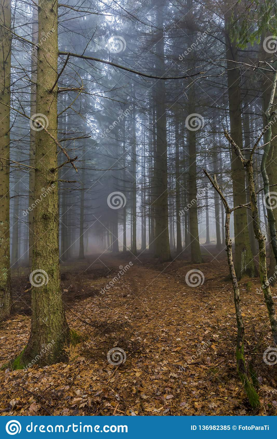 Beautiful image of a trail in the forest covered in dry leaves among tall pine trees
