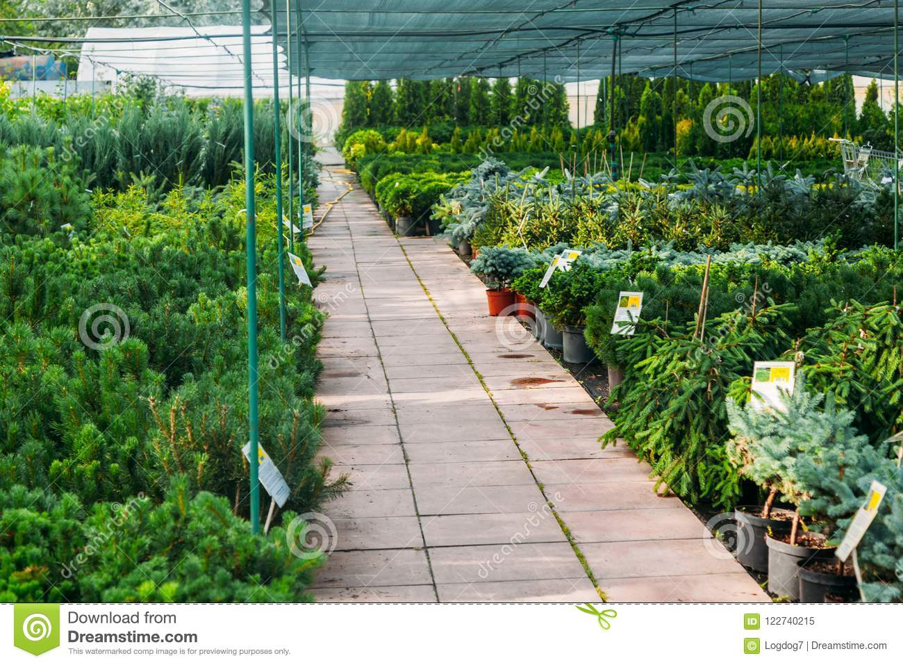 Phenomenal Indoor Greenhouse Market At Summer Stock Image Image Of Home Interior And Landscaping Dextoversignezvosmurscom