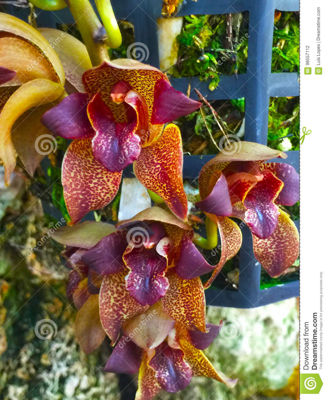 Beautiful intense orchid flower