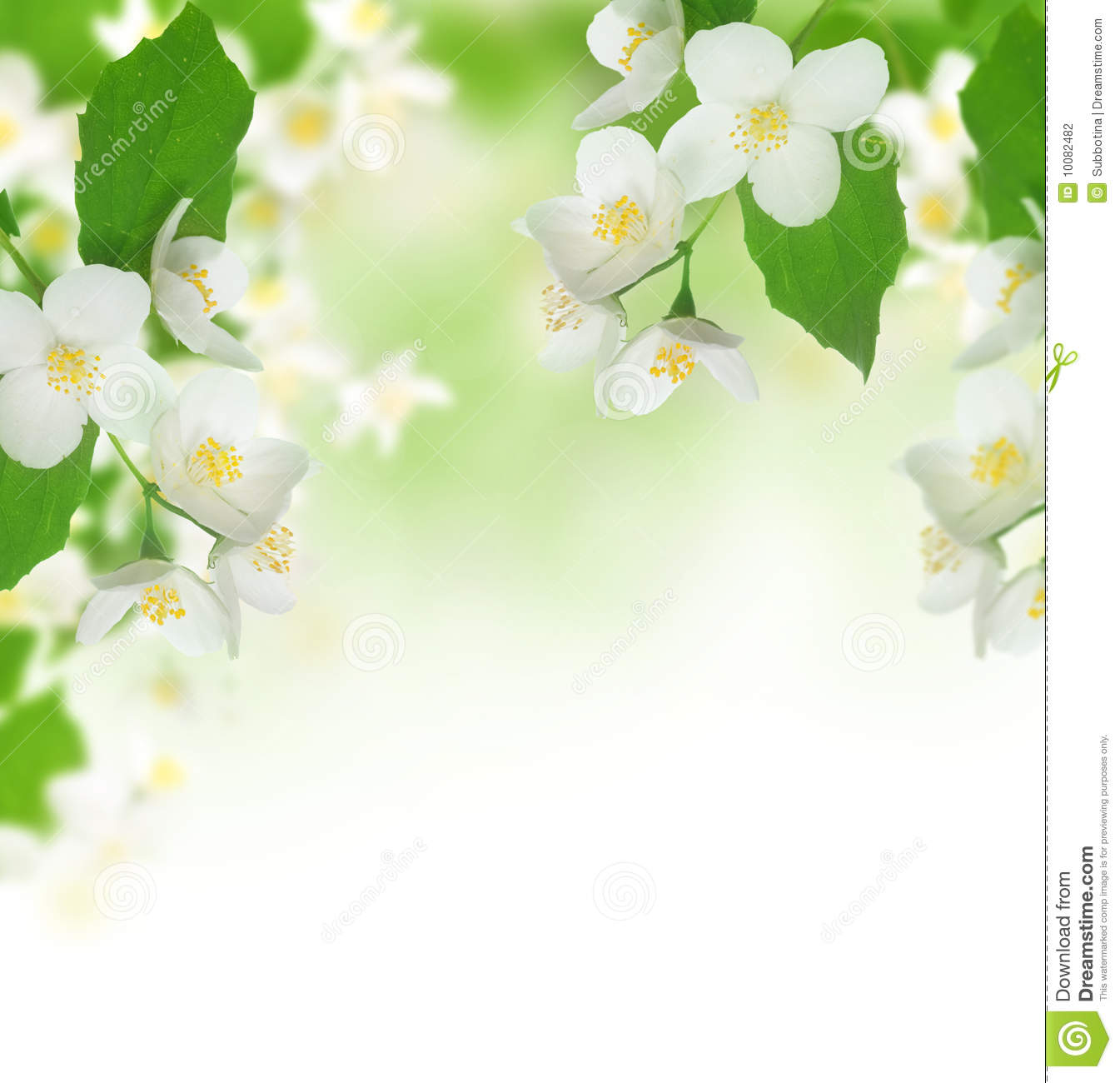 Beautiful Jasmine Stock Photography
