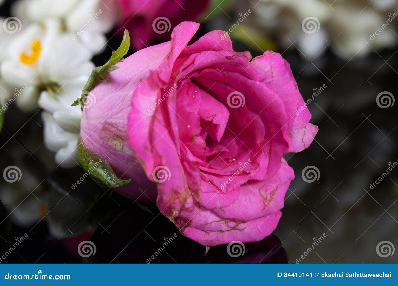 Beautiful jasmine garland of flowers with pink rose stock photo beautiful jasmine garland of flowers with pink rose stock image izmirmasajfo