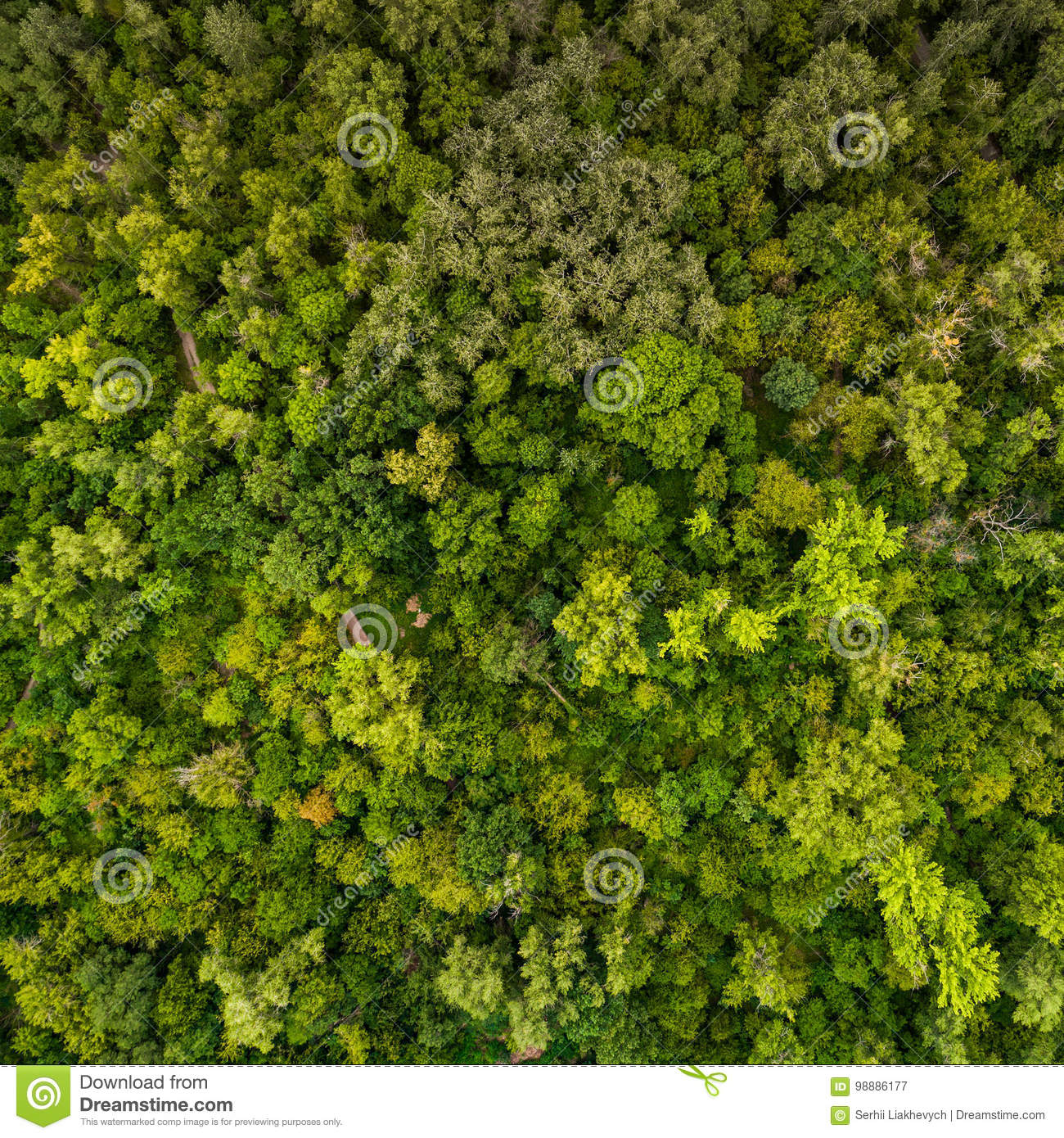 Forest pattern. View from above.