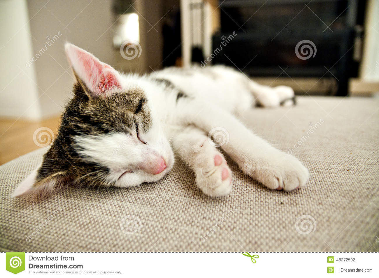 beautiful kitten in front of fireplace stock photo image 48272502