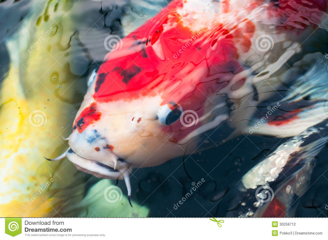 Beautiful koi fish stock photography image 30258712 for Dream of fish swimming
