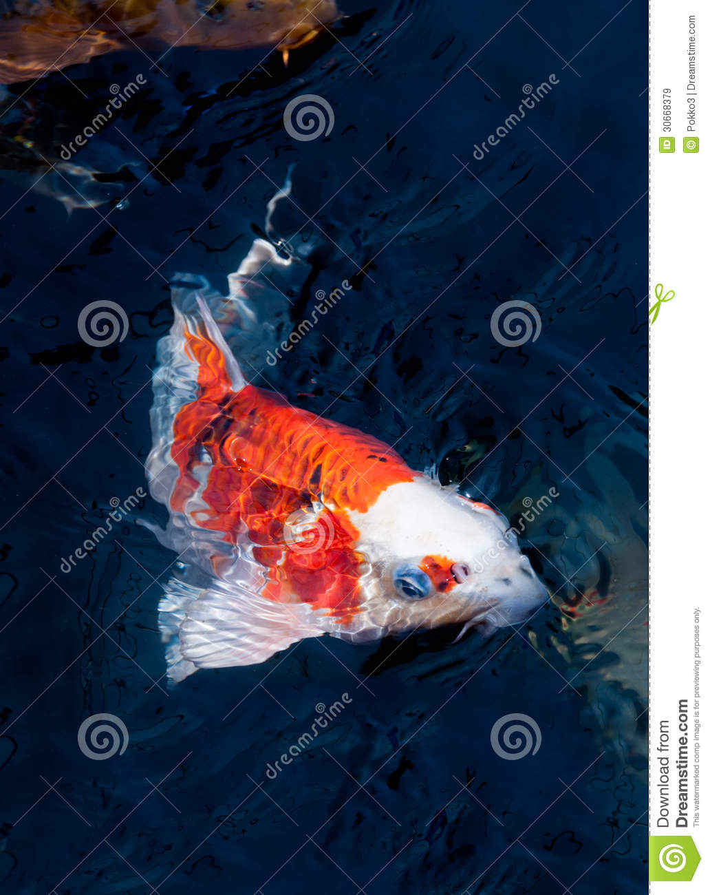Beautiful koi fish royalty free stock images image 30668379 for Dream of fish swimming