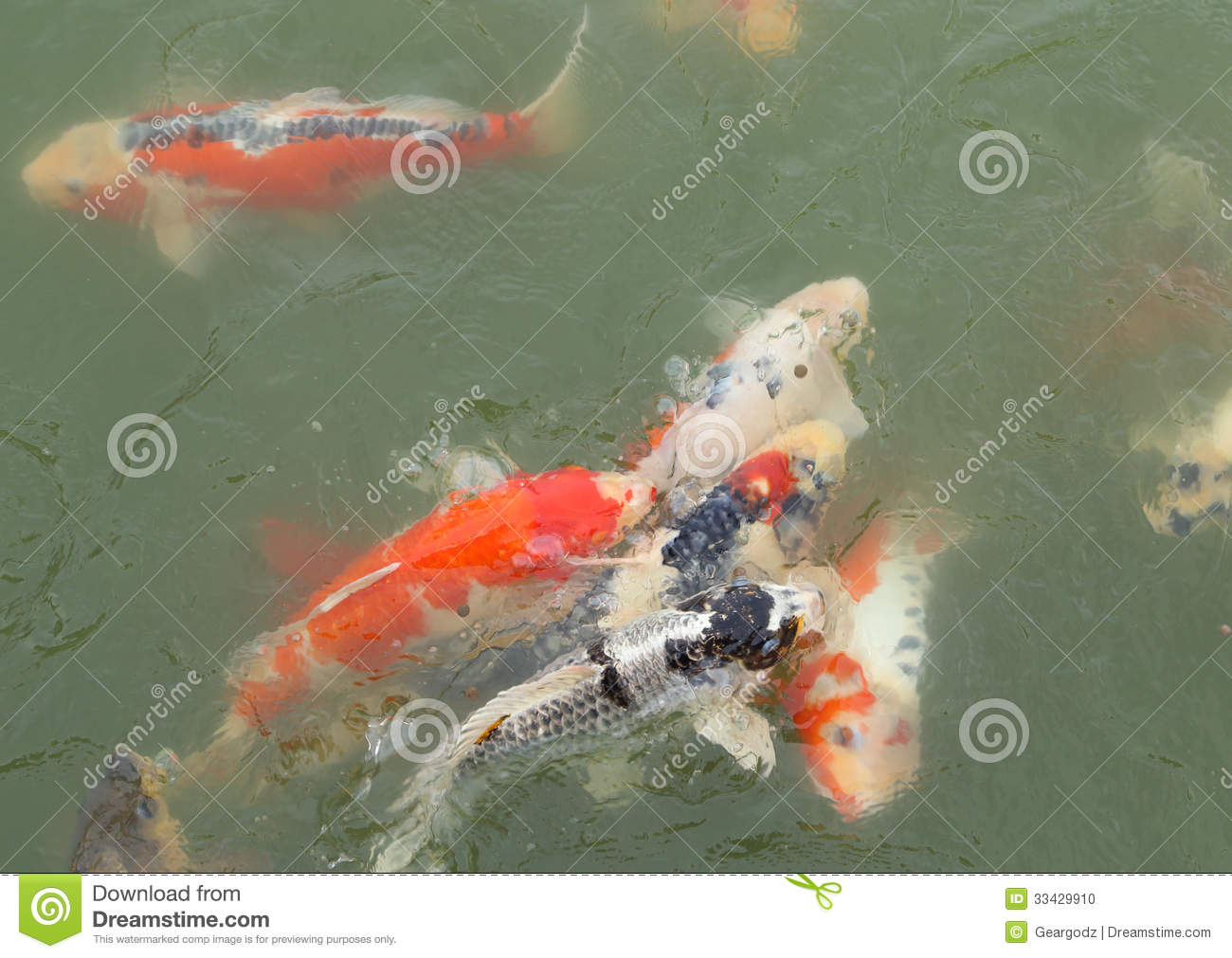 Beautiful koi fish swimming stock photo image 33429910 for Fish swimming video