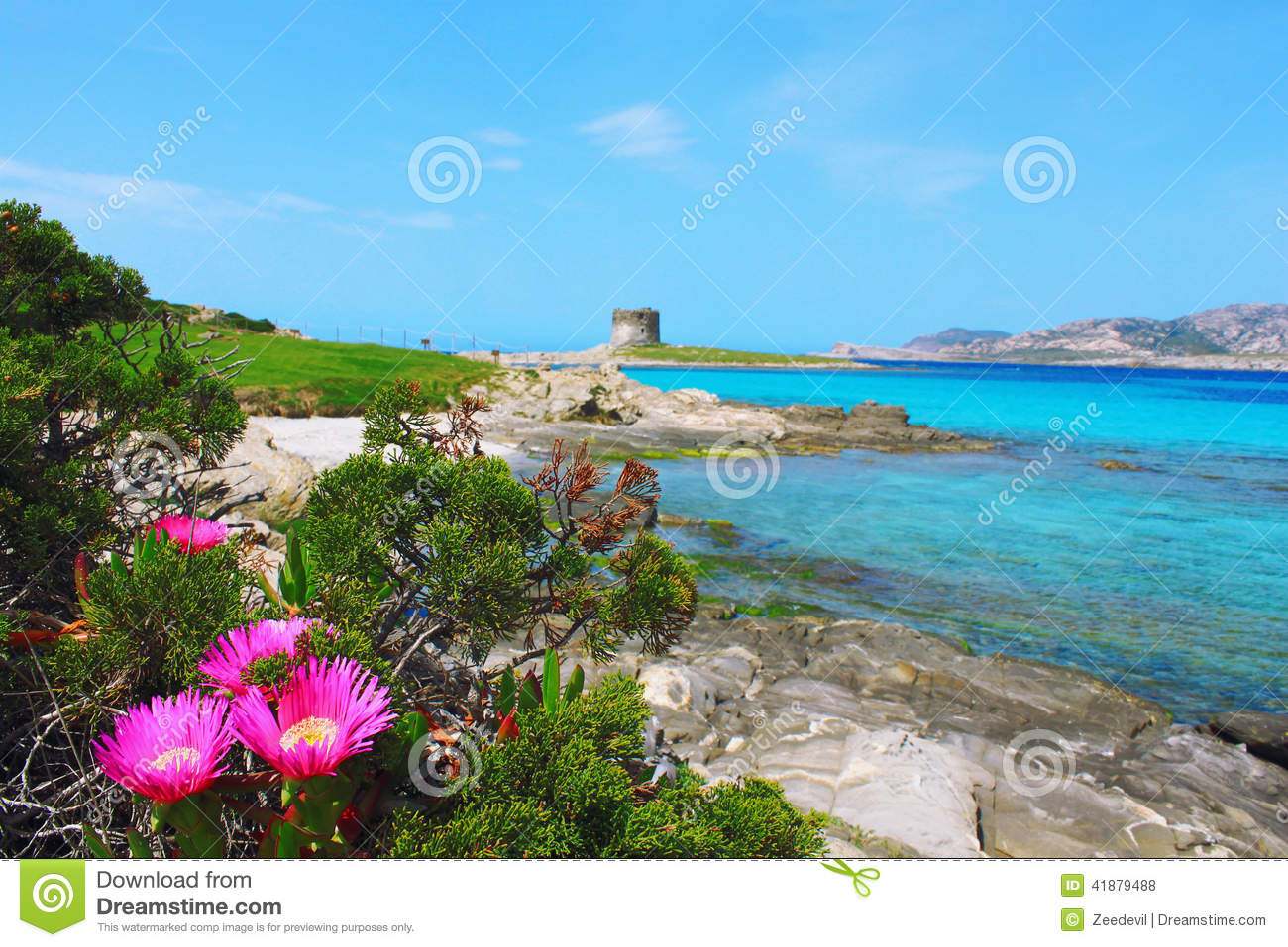Beautiful la pelosa beach in stintino sardinia italy for Beautiful beaches in la