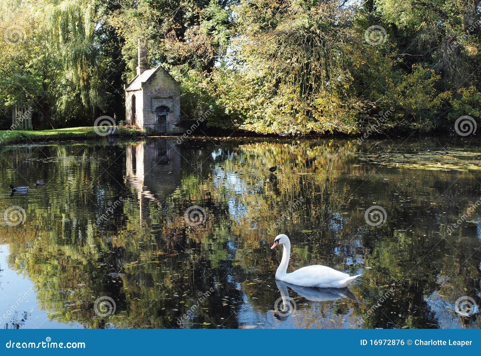Beautiful Lake Scene With Swan, England Stock Photo - Image of tree, reflection: 16972876