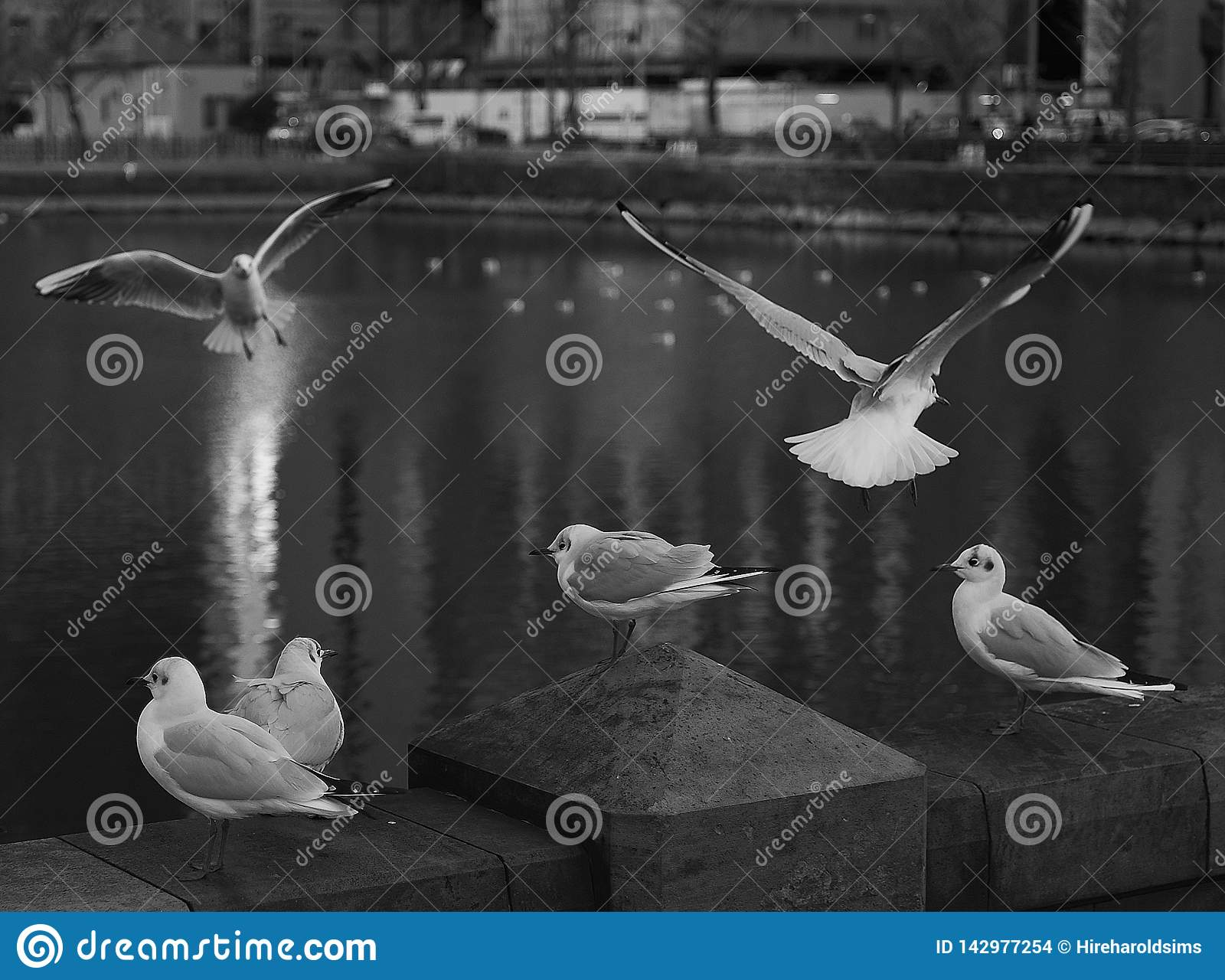 Lake in Tokyo Japan with fauna birds