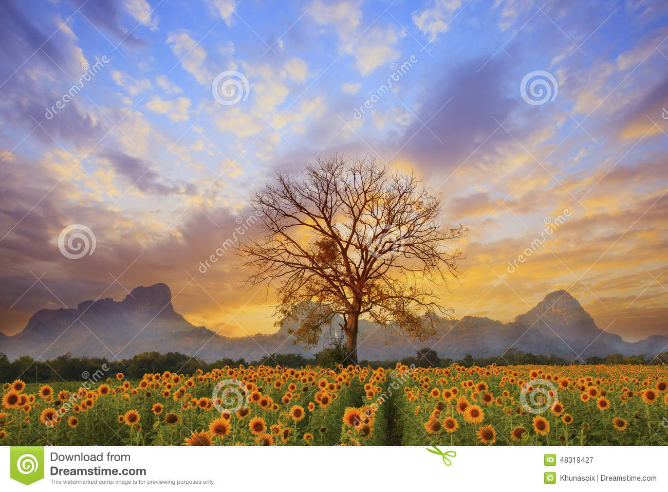Stock Photo Beautiful Landscape Dry Tree Branch Sun Flowers Field Against Colorful Evening Dusky Sky Use As Natural Background Backdrop Image48319427 on magnolia texas scenery
