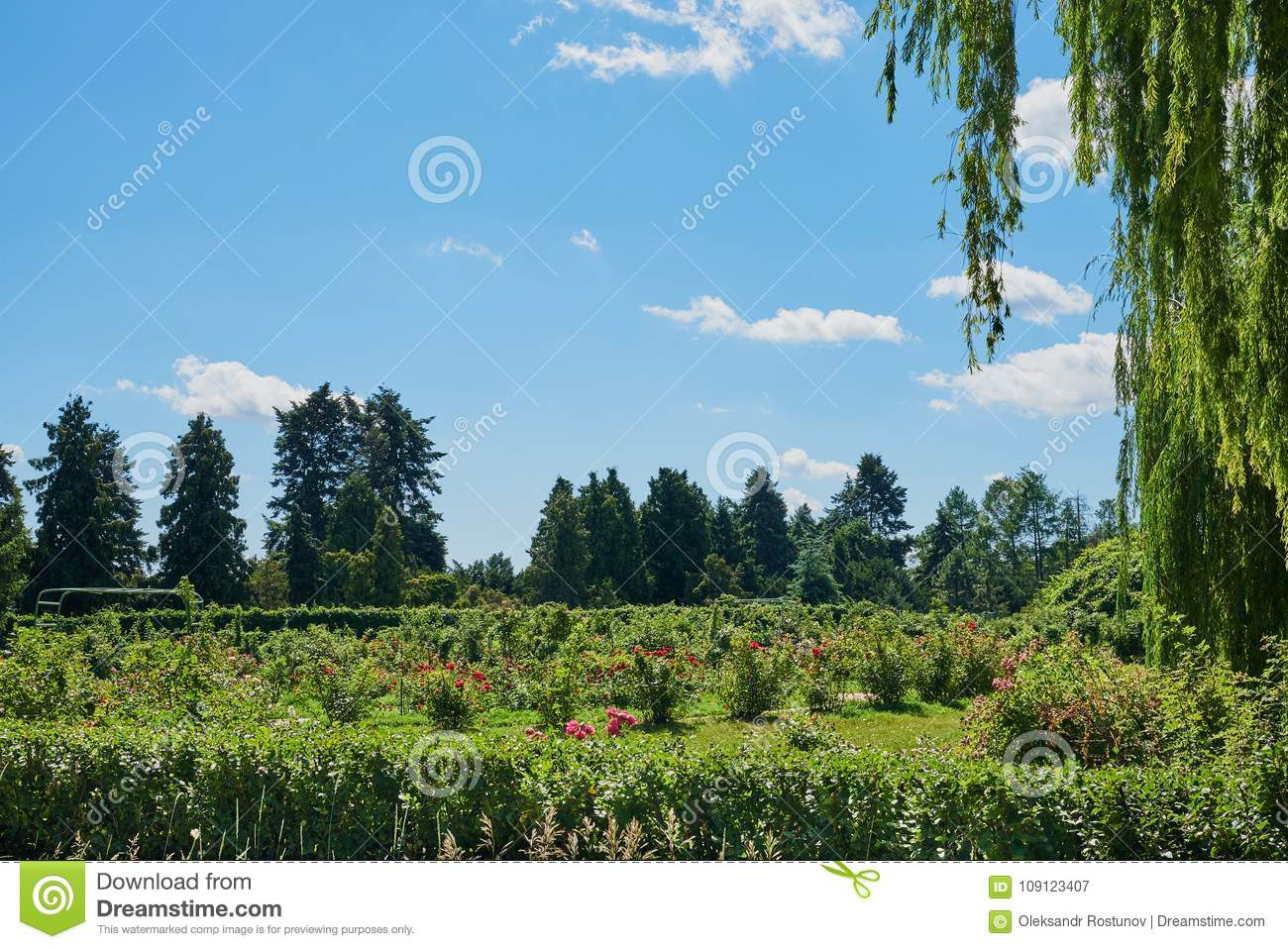 Beautiful landscape with firs, flowers, weeping willow