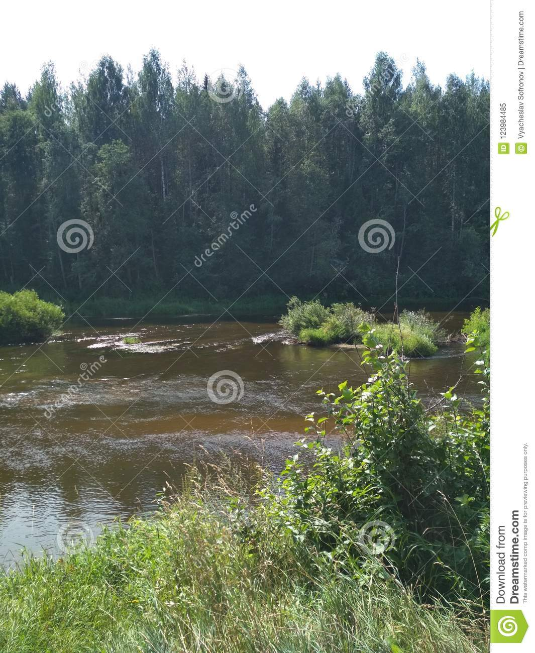 Beautiful Landscape Forest River Bank In Central Russia