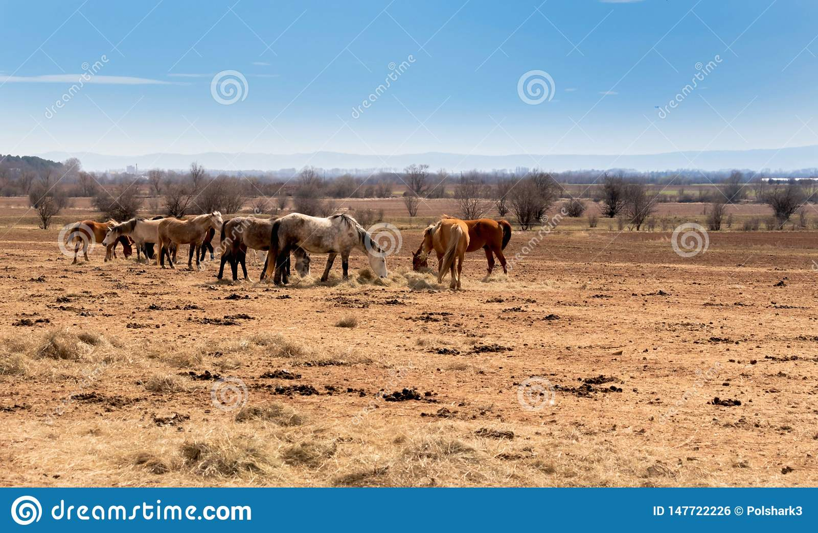 beautiful landscape, the herd of horses grazing in the field