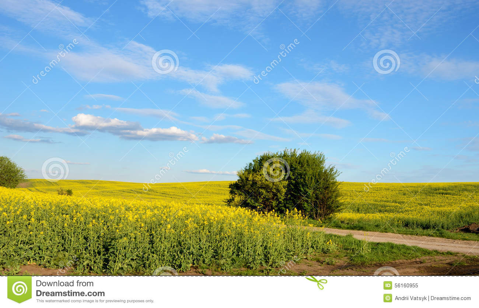 beautiful yellow field landscape - photo #19