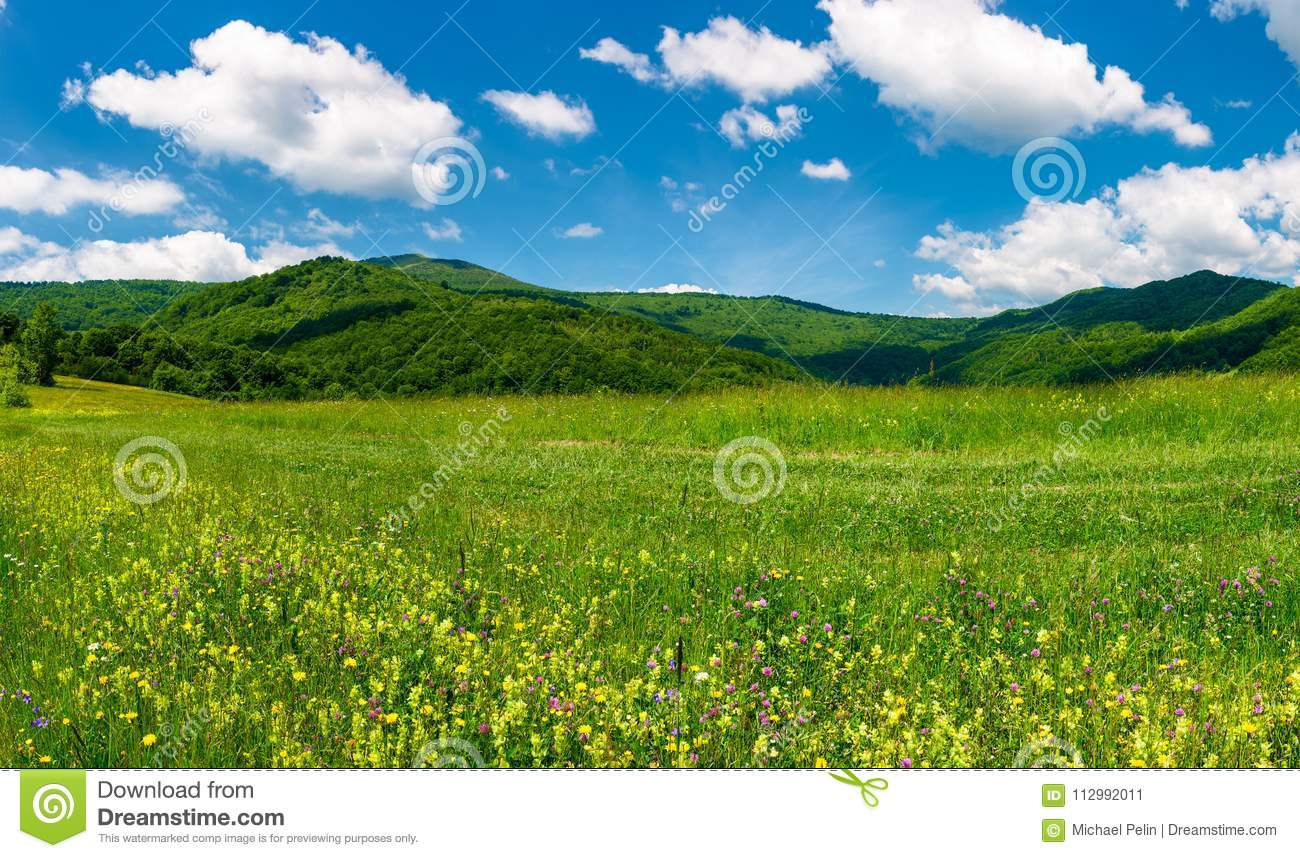 Beautiful landscape with meadow in mountains