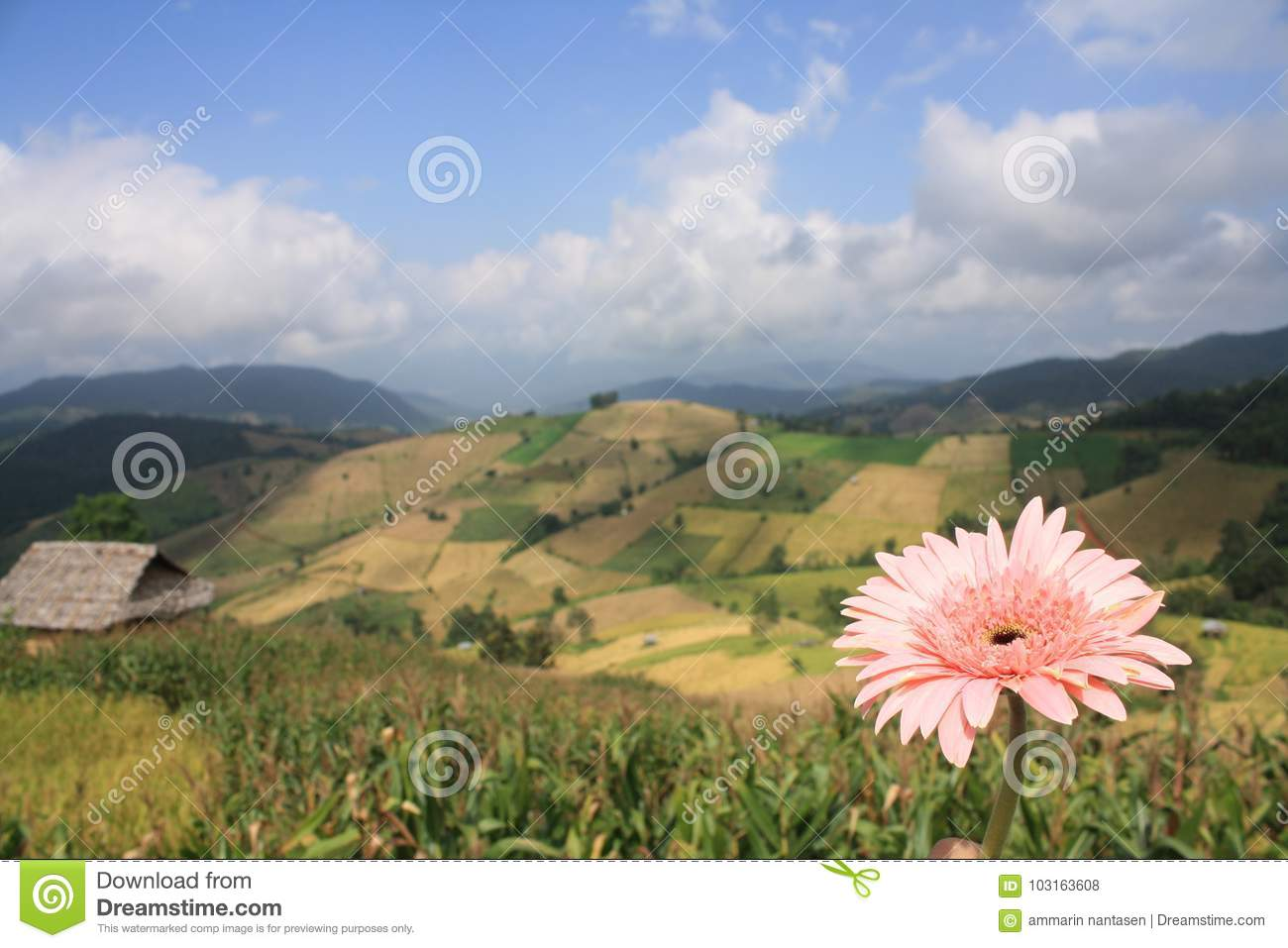 Beautiful flower and landscape of mountain background stock photo download beautiful flower and landscape of mountain background stock photo image of ecosystem plain izmirmasajfo