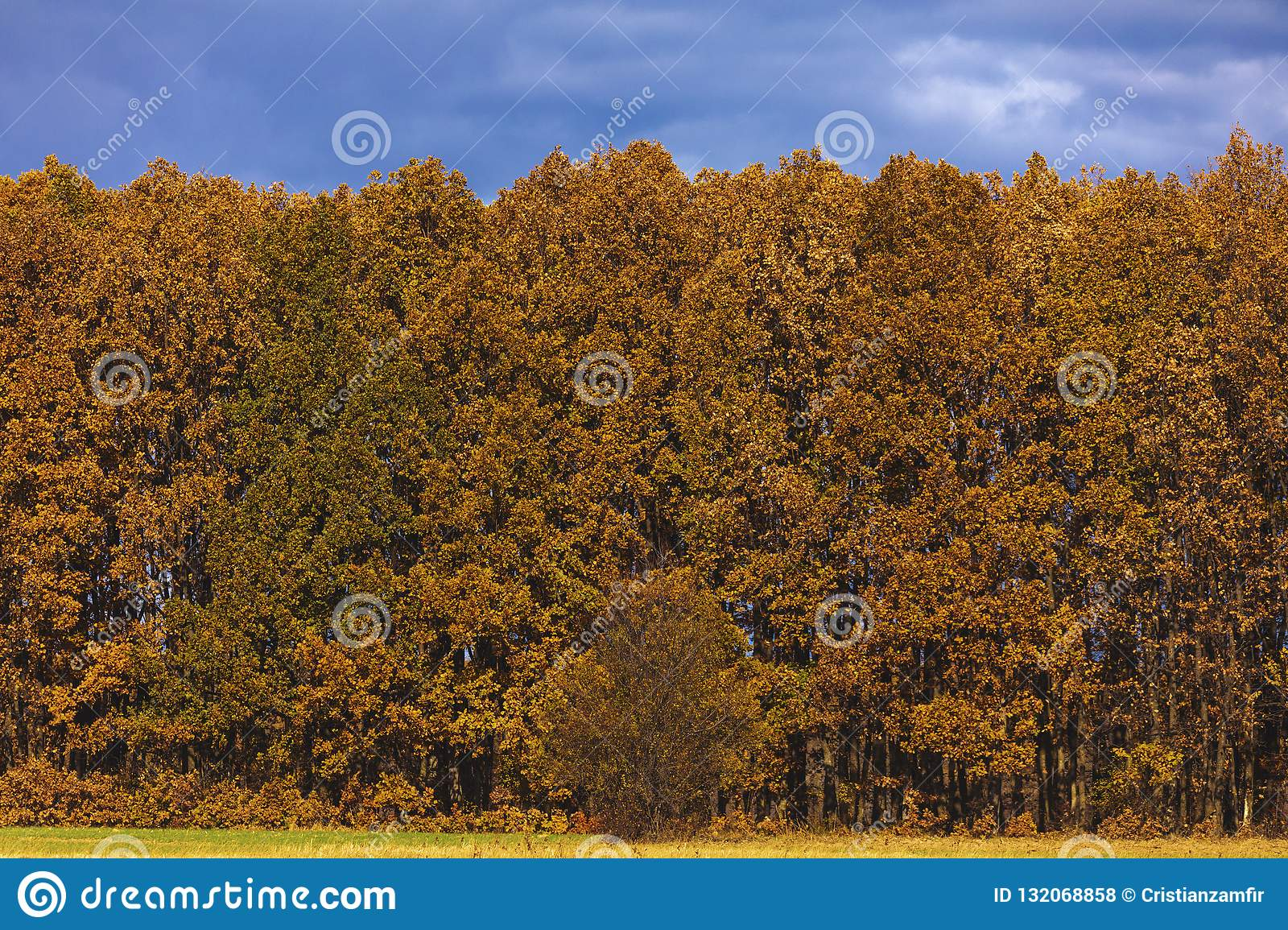 Beautiful Landscape With Oak Forest Stock Photo Image Of Orange Country 132068858