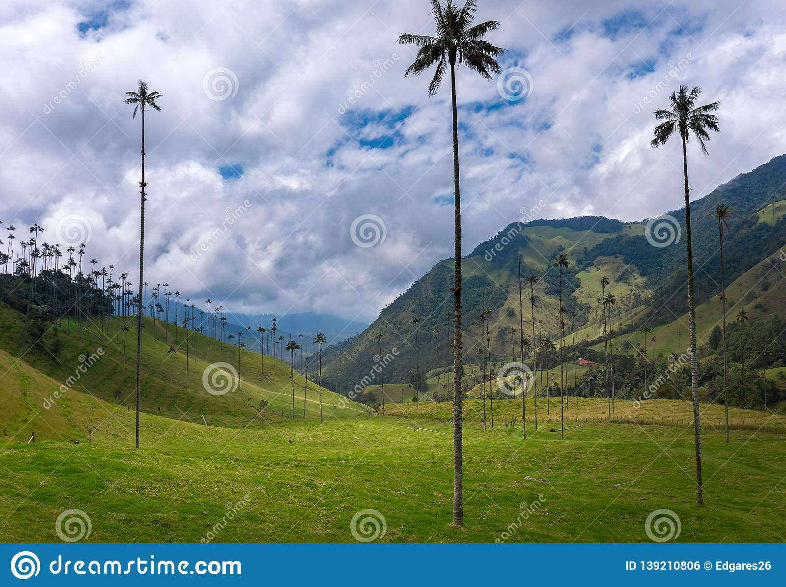 Beautiful Landscape Of The Valle Del Cocora In Salento Quindio Colombia Stock Photo Image Of Costa Jungle 139210806