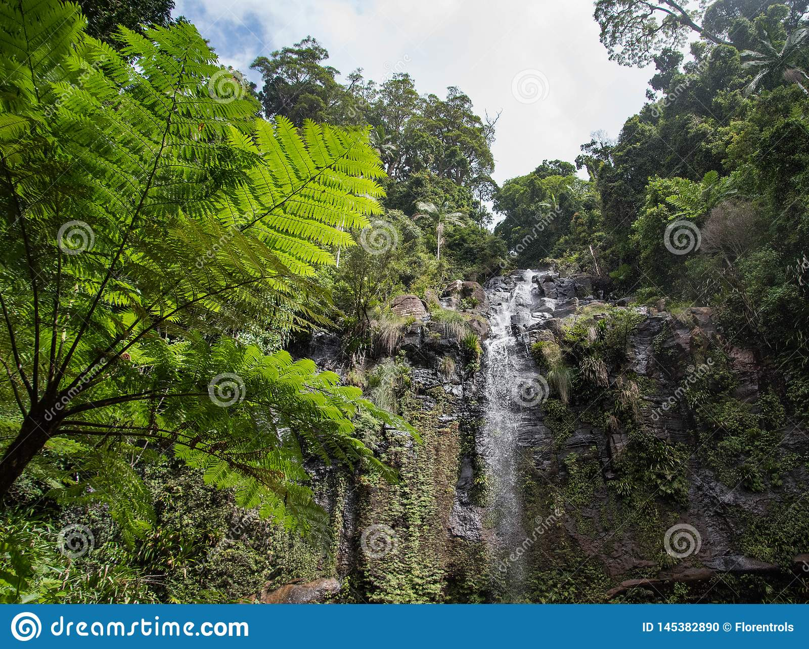 Beautiful landscape view of a forest with nice trees and waterfall
