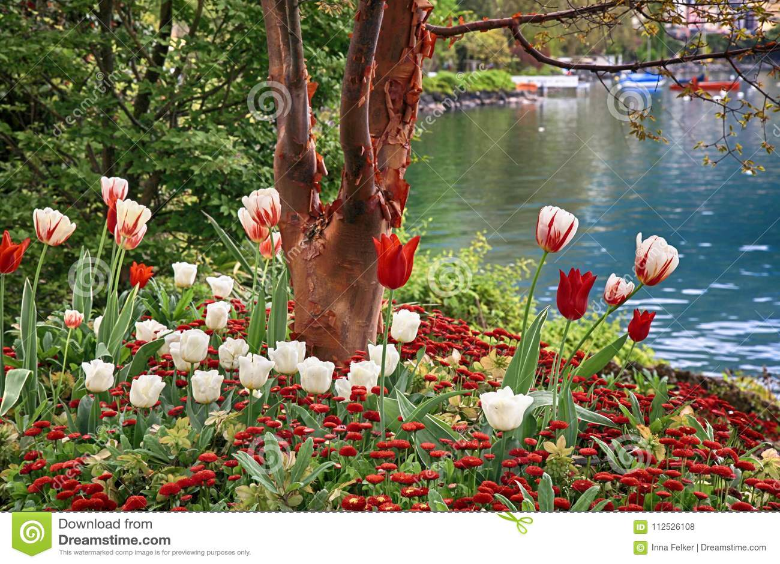 Beautiful landscape with flowers and lake geneva montreux swit download beautiful landscape with flowers and lake geneva montreux swit stock photo image izmirmasajfo