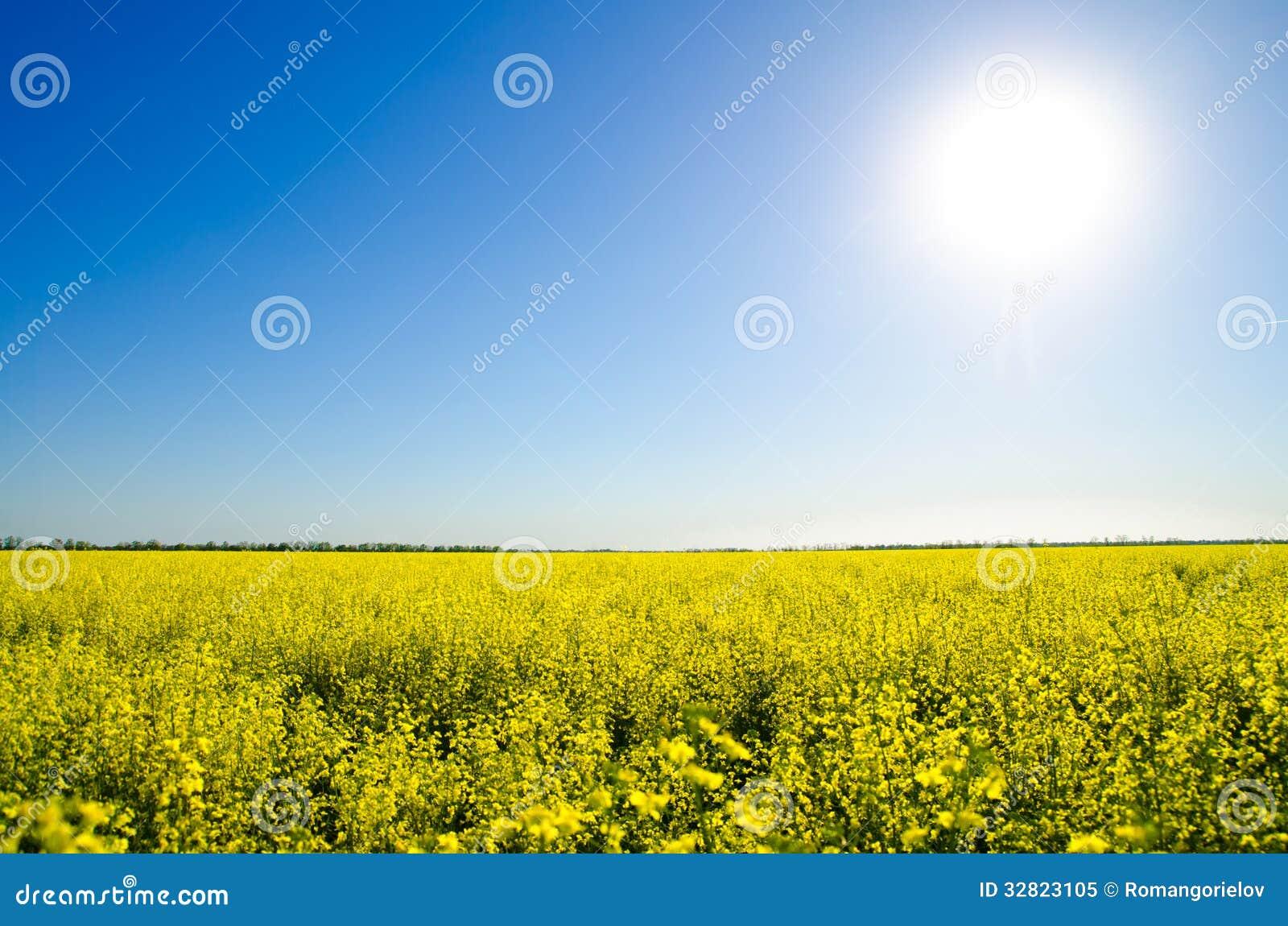 beautiful yellow field landscape - photo #12