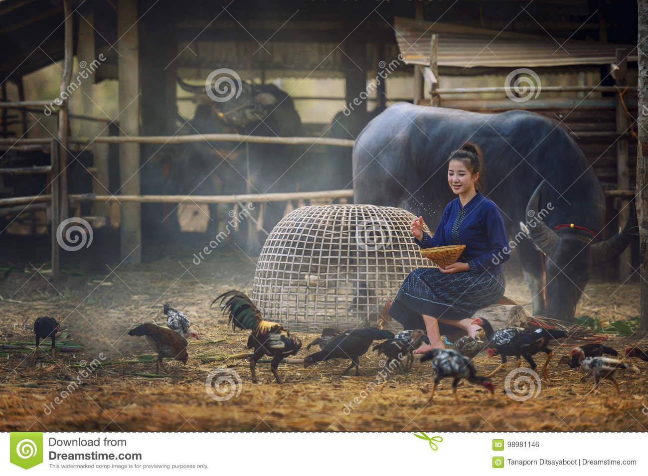 Beautiful Laos woman feeding chickens in countryside on farm background.