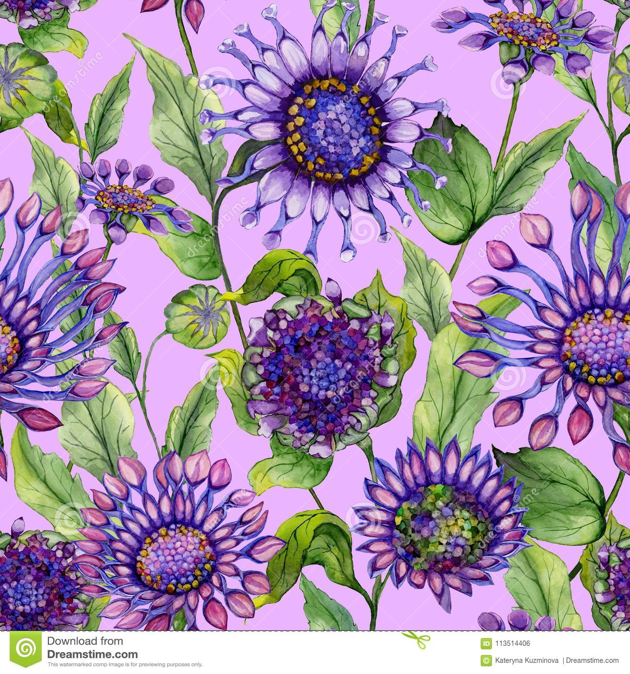 Beautiful Large Vivid African Daisy Flowers With Green Leaves On