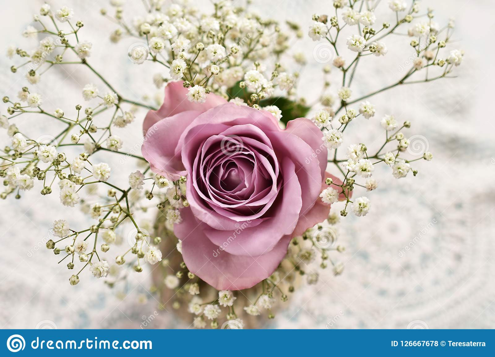 Beautiful lavender color rose with gypsophilla -top view