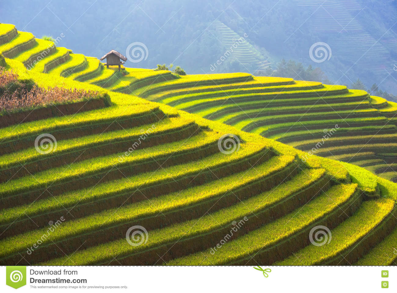 The Beautiful layer of Mountain and nature in rice terrace of Vietnam Landscape