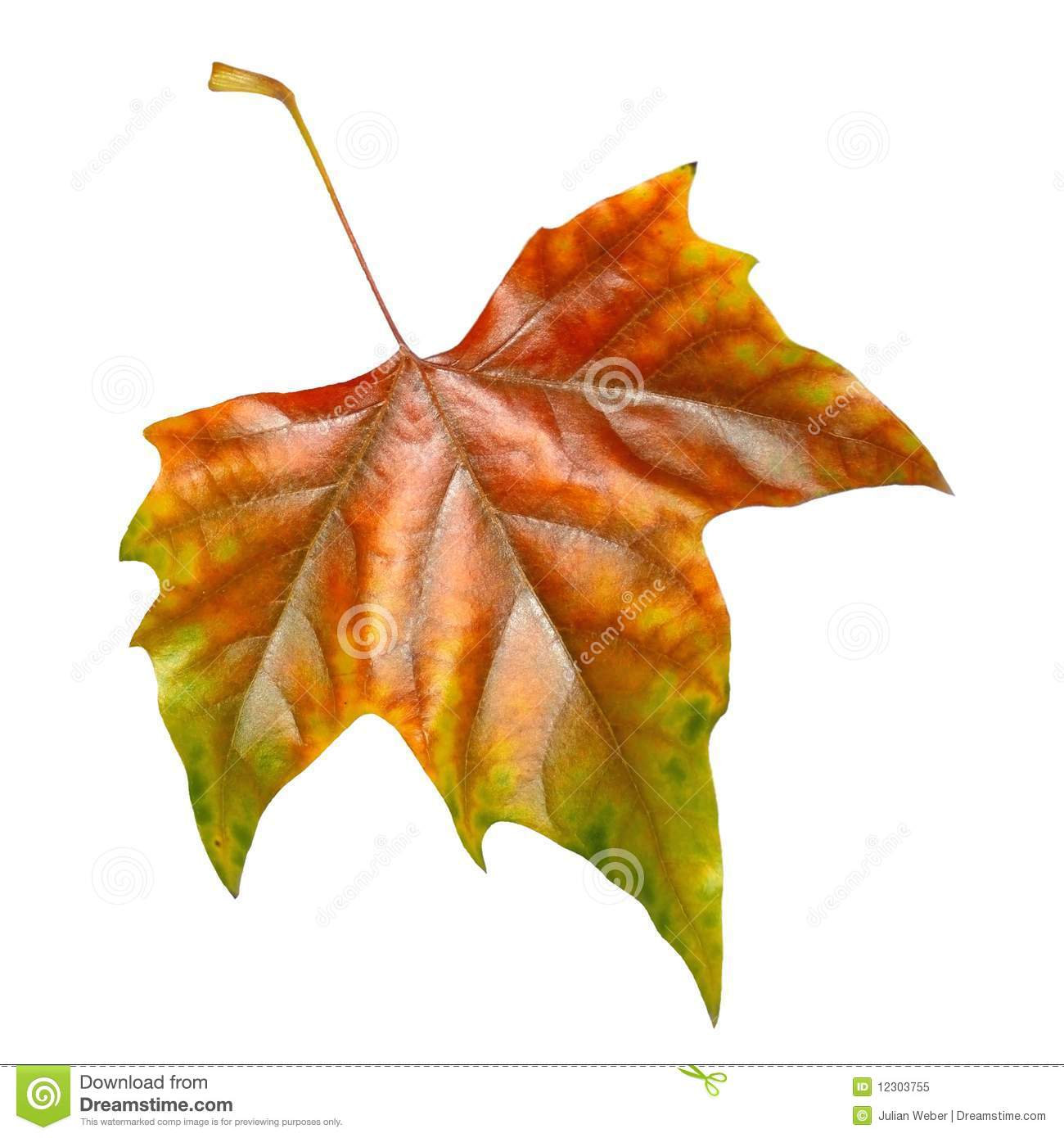Beautiful Leaves In Autumn Royalty Free Stock Photo