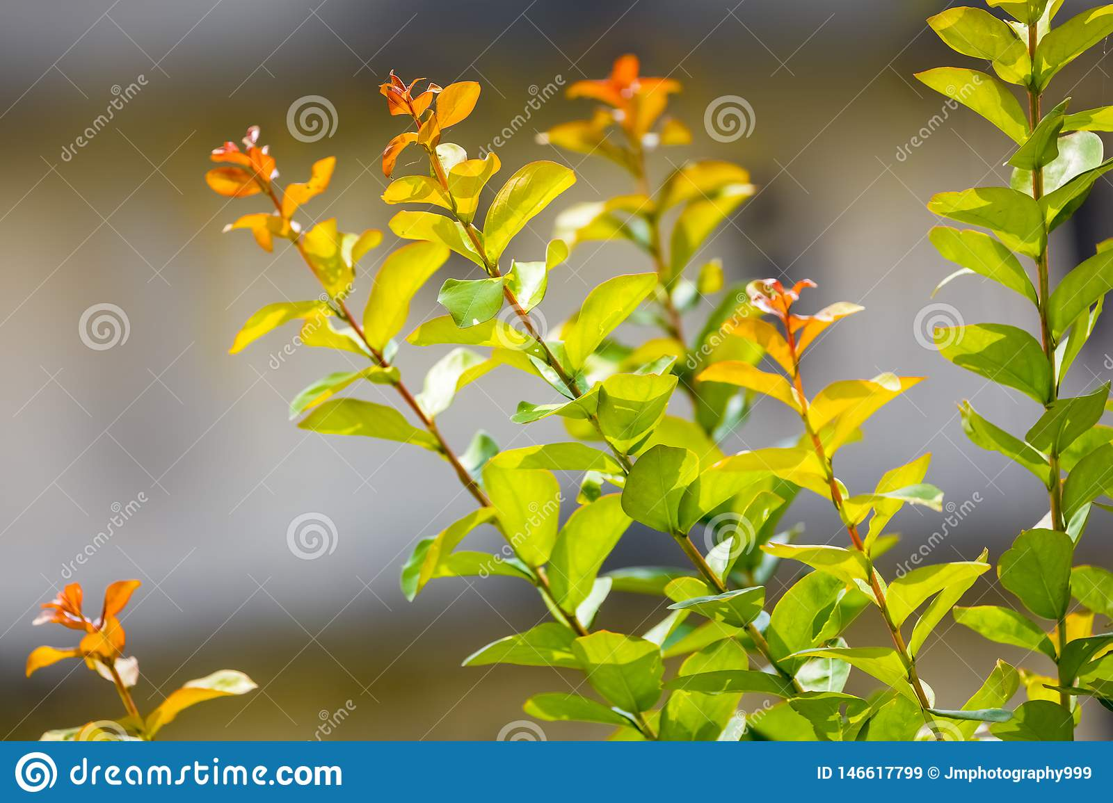 Beautiful leaves branches shining in sunlight