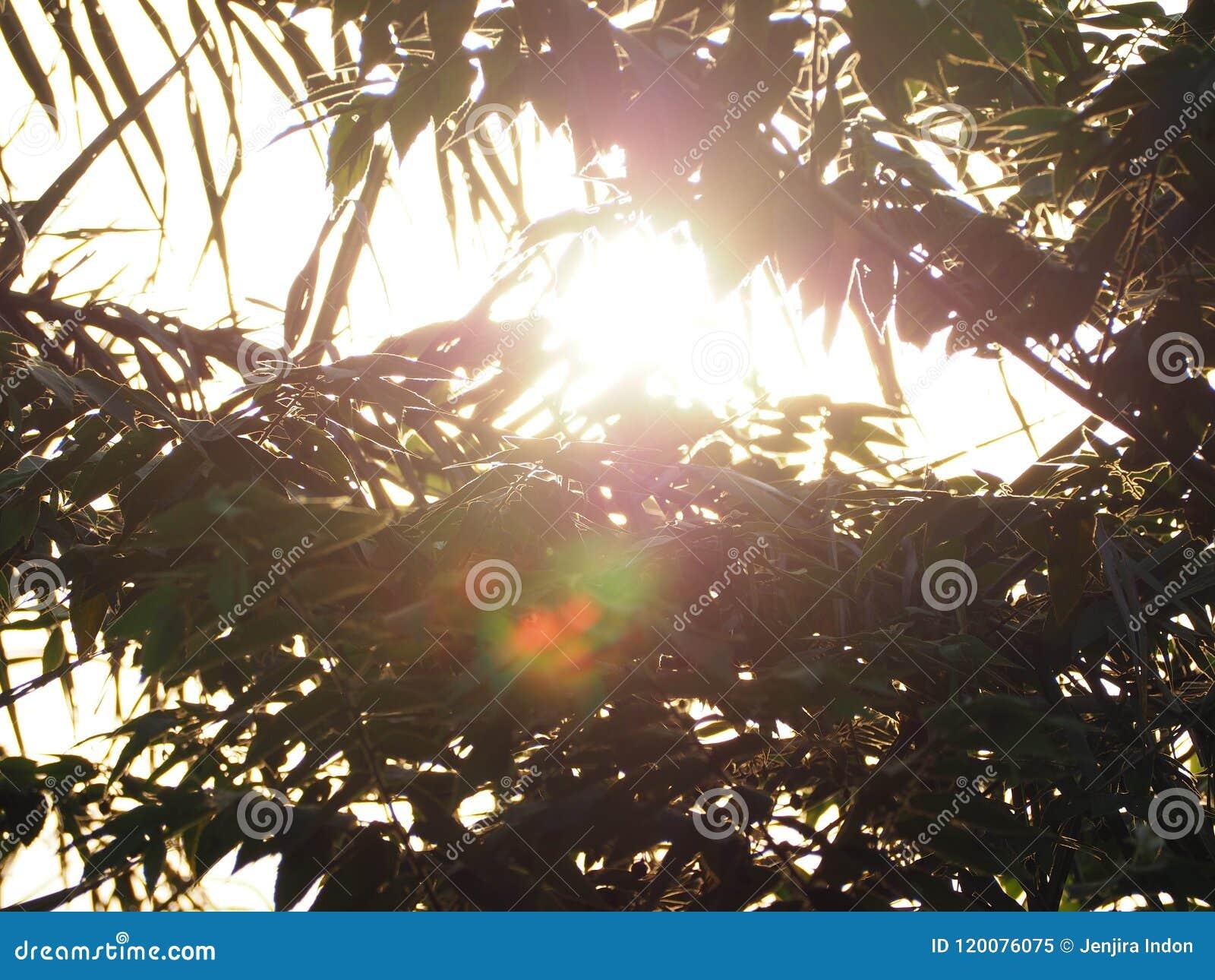 Beautiful of light of sunshine