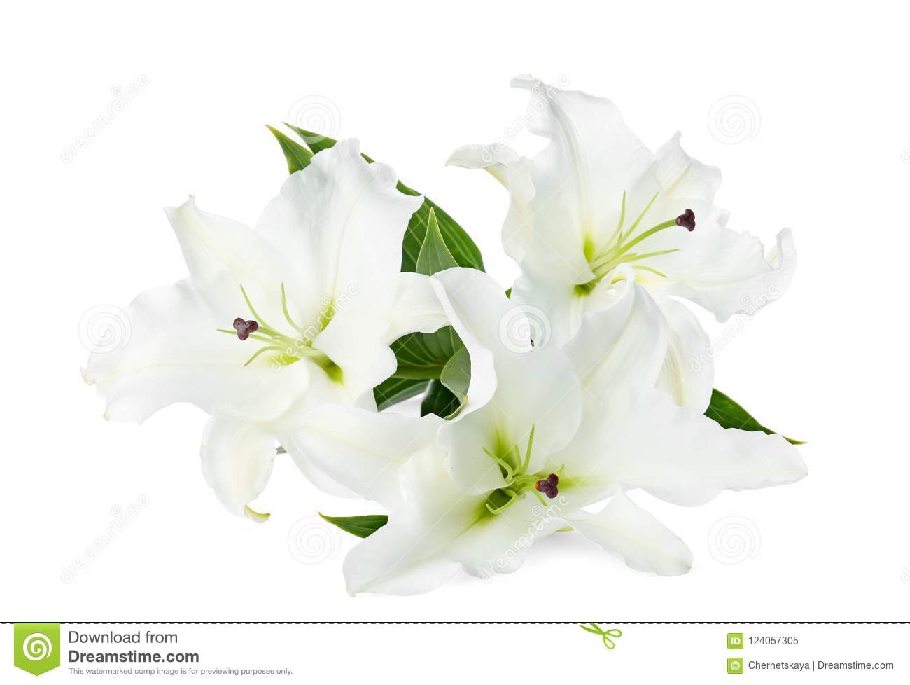 Beautiful Lilies On White Background Stock Image Image Of Lilies