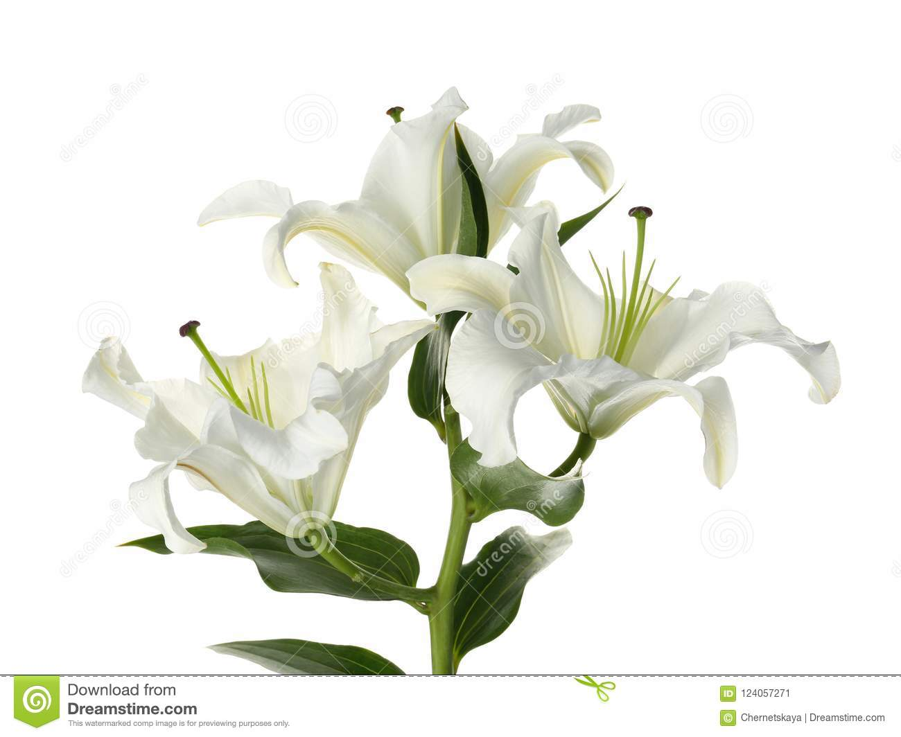 Beautiful Lilies On White Background Stock Image Image Of Lily
