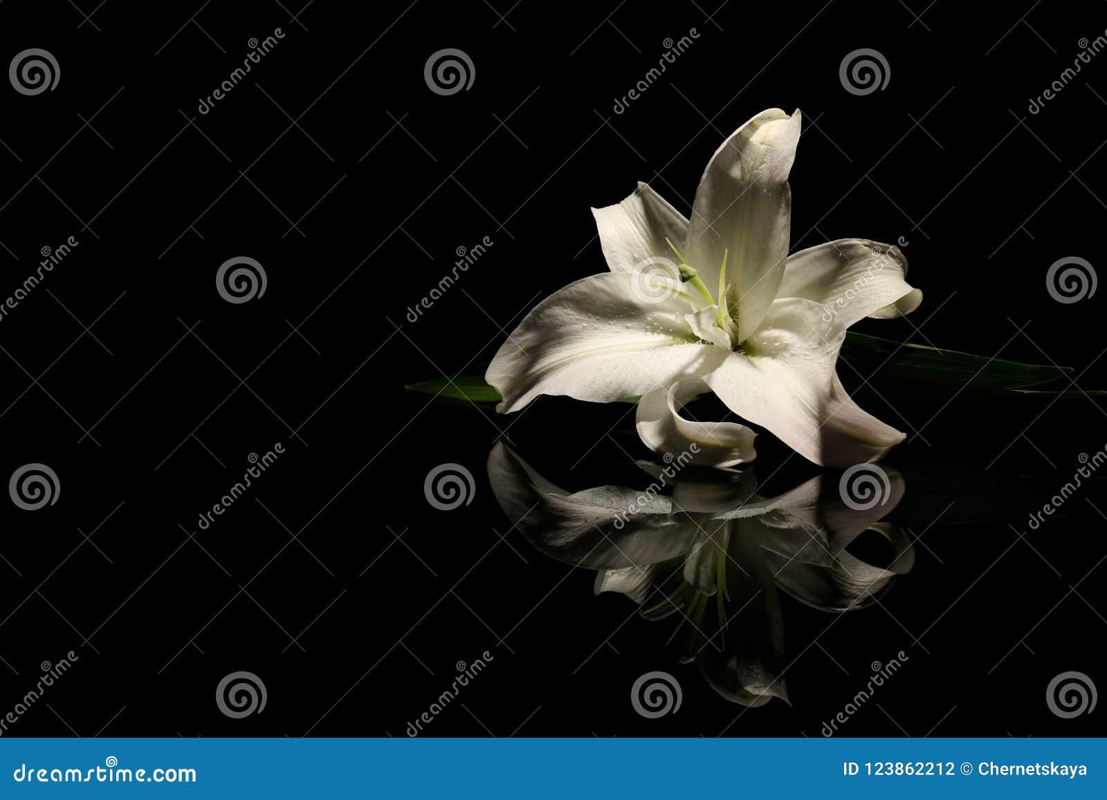Beautiful lily on dark background with spac stock photo image of download beautiful lily on dark background with spac stock photo image of death christian izmirmasajfo