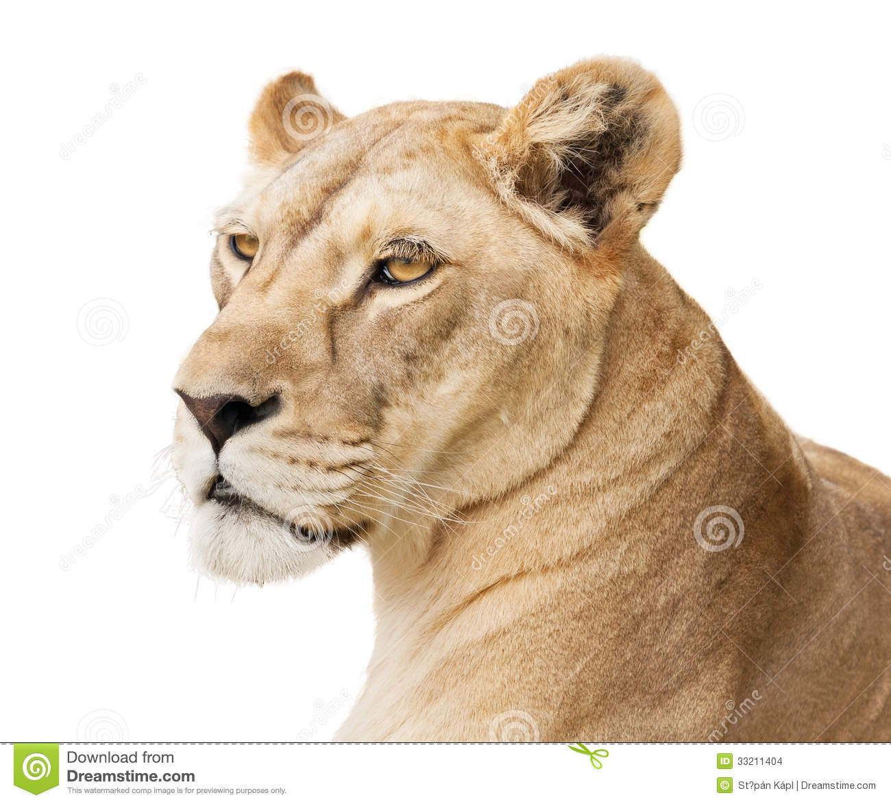 Beautiful Lioness Stock Images - Image: 33211404