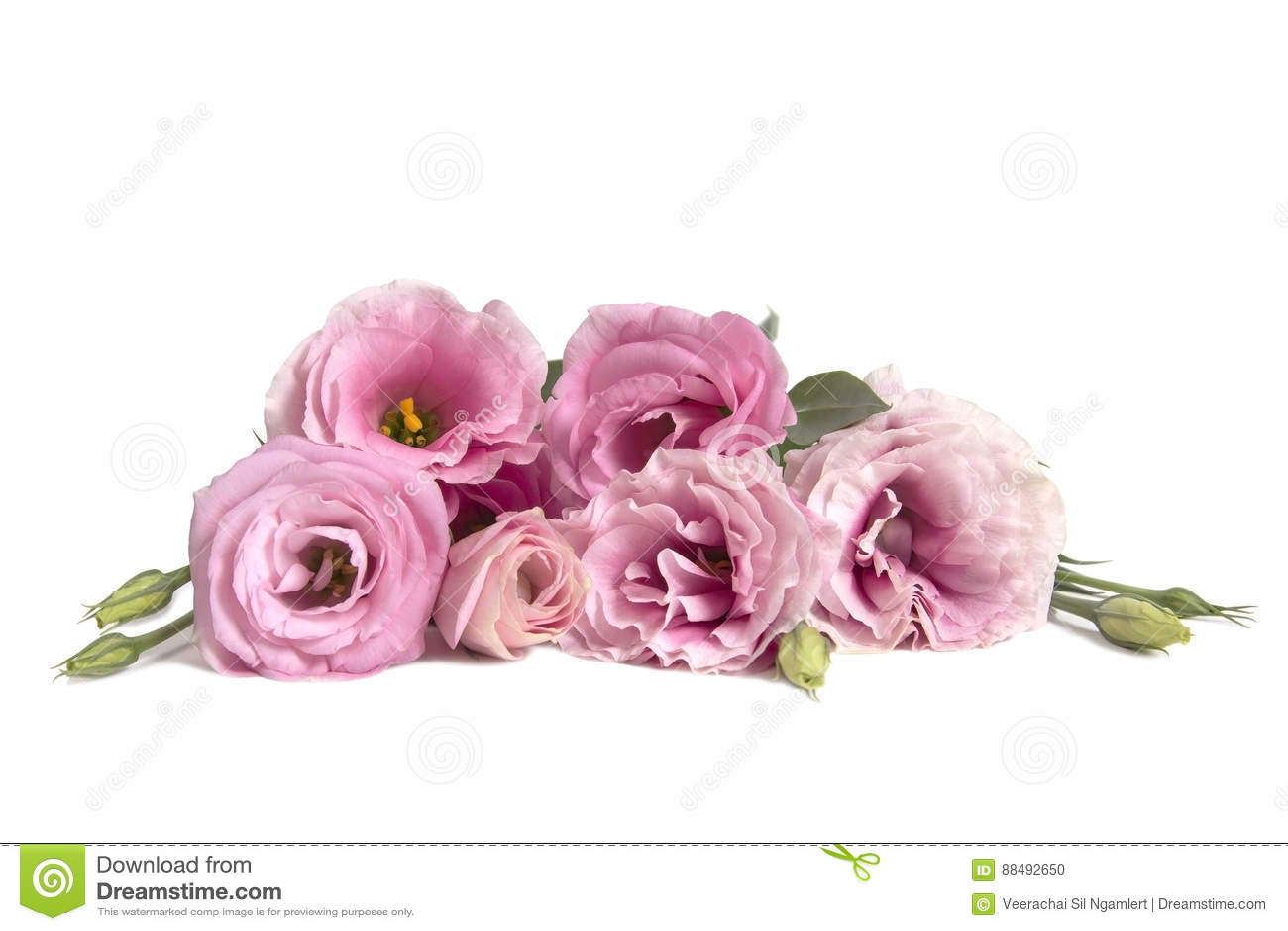 Beautiful Lisianthus Flower Bouquet On White Background Stock Photo