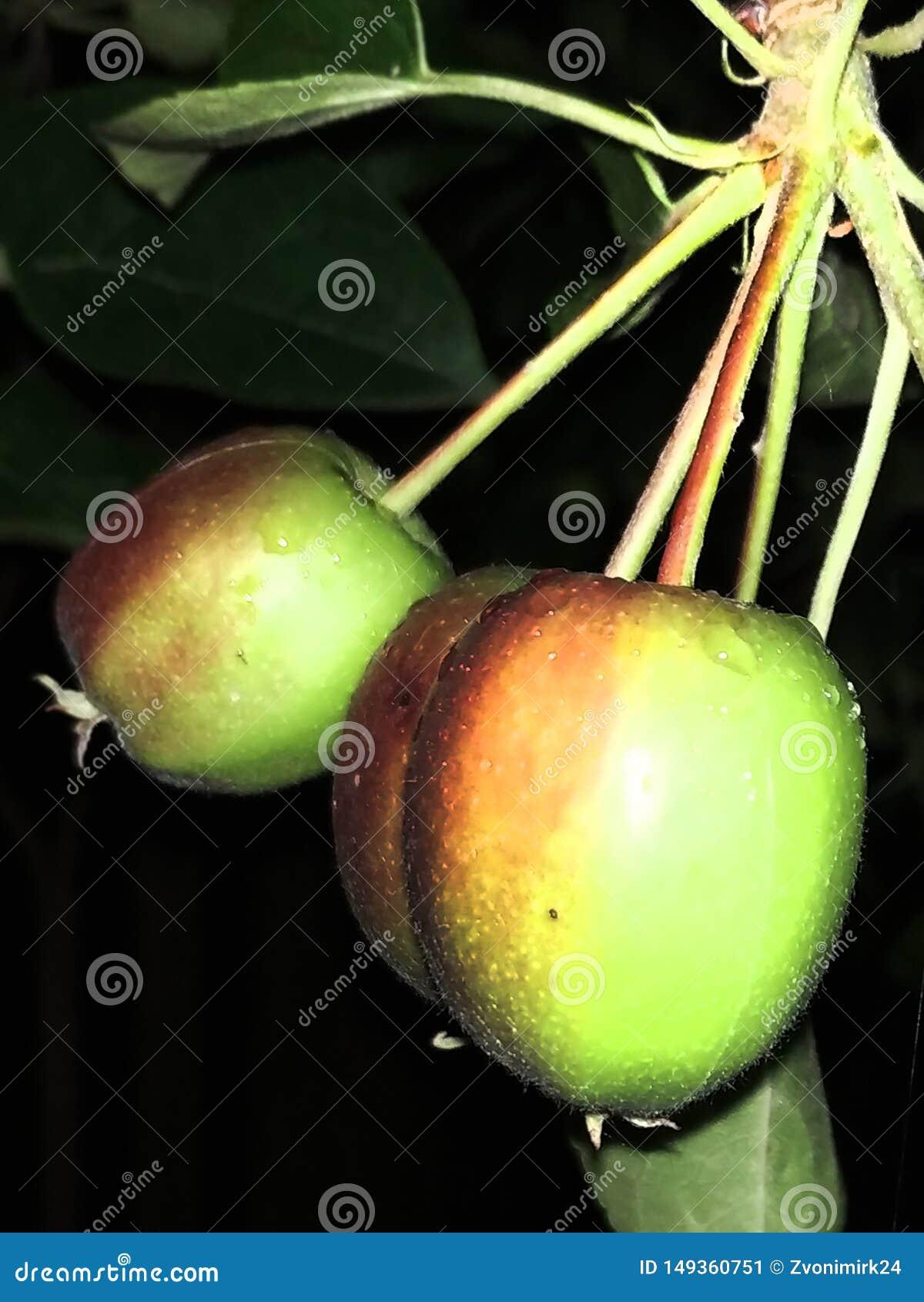 Beautiful little apples. At night.