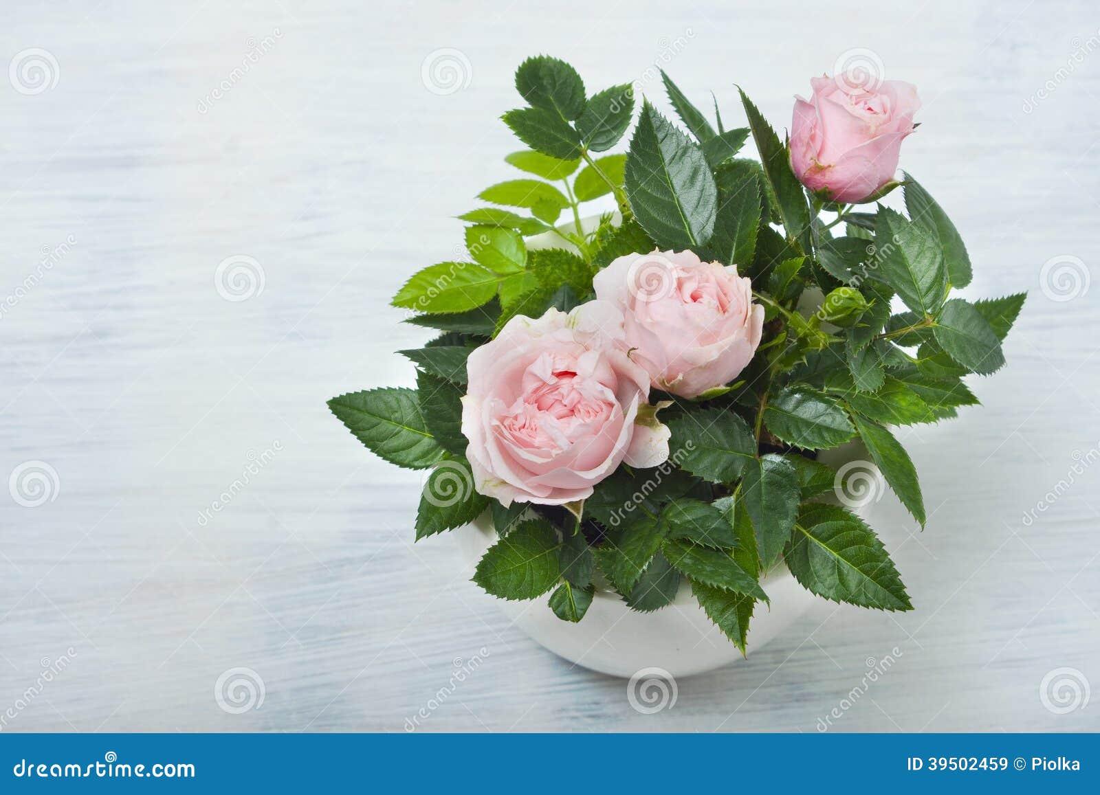 Beautiful little roses