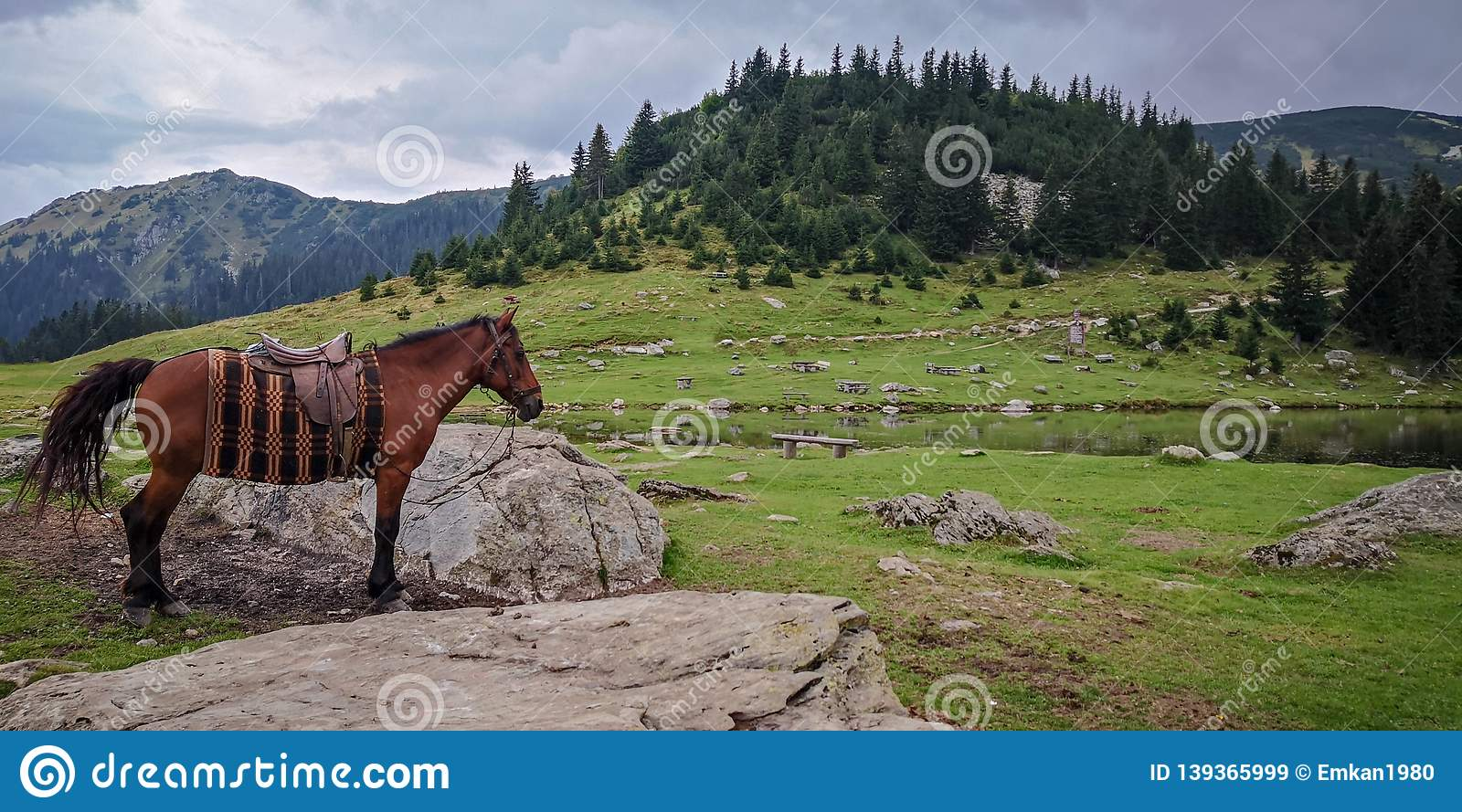 Beautiful look at horse with mountains in the background