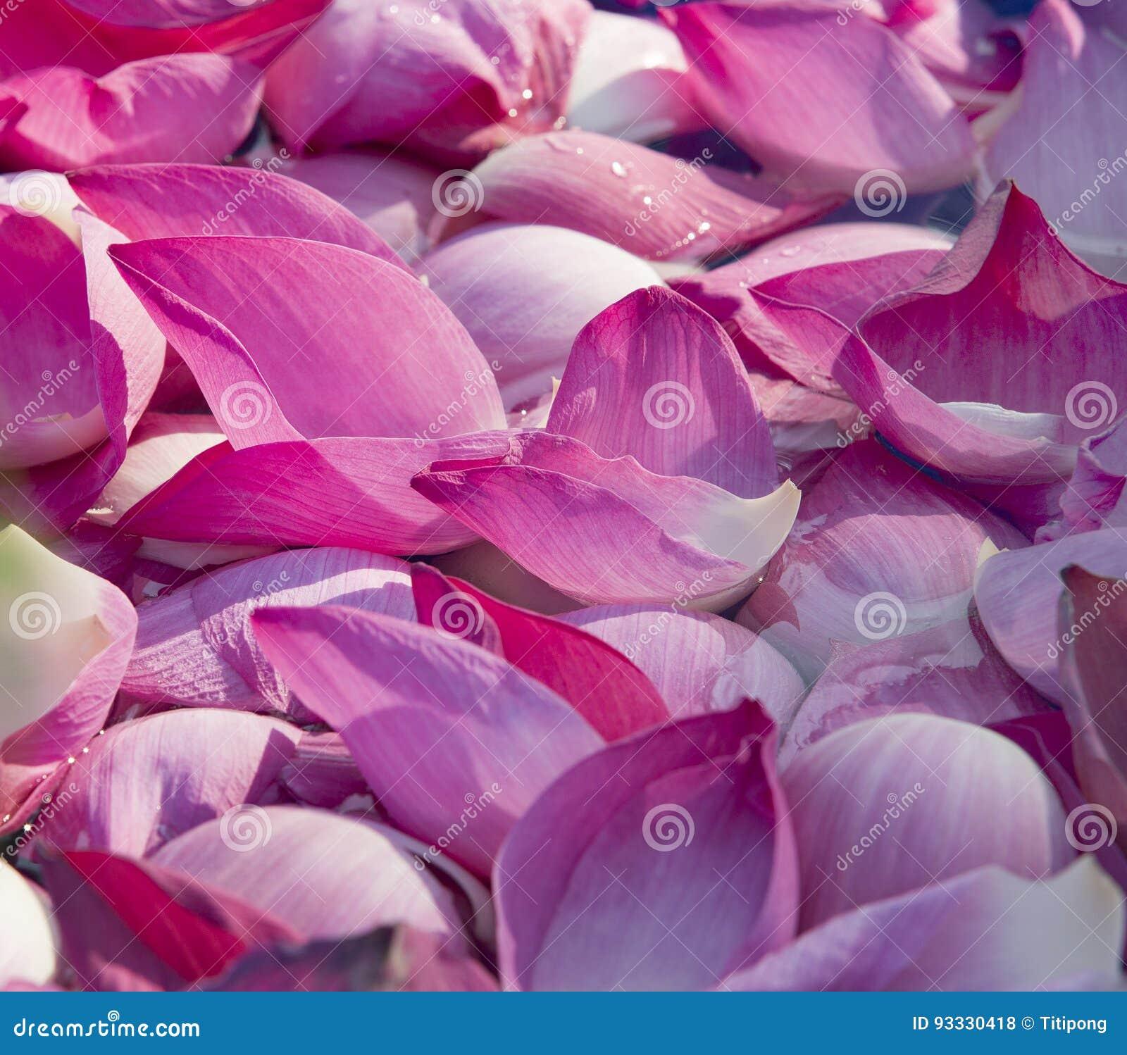 Beautiful Lotus Flower At The Wedding Stock Photo Image Of