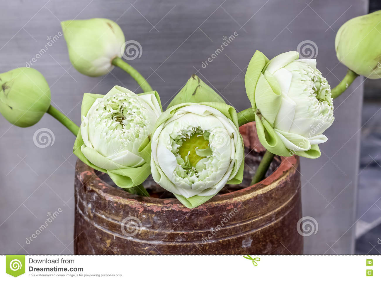 Beautiful Lotus Flowers In Vase For Pay Respect To Buddha Stock
